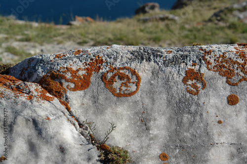 A rusty elegant sunburst lichen (Xanthoria elegans), growing upon the stone in a Canvas Print