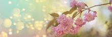 Pastelowe Tło Z Kwiatami Drze...