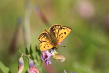 Close-up Of Yellow Butterfly On Purple Flower