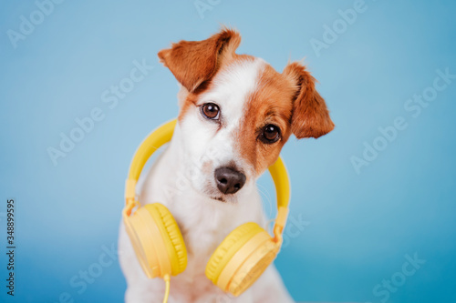 Photo portrait of cute jack russell dog wearing yellow headset over blue background