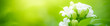 Leinwandbild Motiv Beautiful nature view of flower on blurred background in garden with copy space using as summer background natural flora plants landscape, ecology, fresh cover page concept.