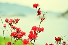 Close Up View Of Red Wildflowers