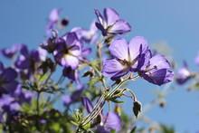Low Angle View Of Purple Wildflowers