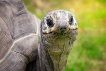 Closeup Portrait Of A Giant Al...