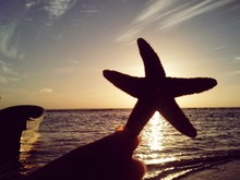 Close-up Of Silhouette Hand Holding Starfish At Beach Against Sky During Sunset