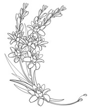 Corner Bouquet Of Outline Tropical Agave Amica Or Polianthes Or Tuberose Flower Bunch With Leaf In Black Isolated On White Background.