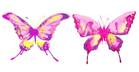 butterfly602