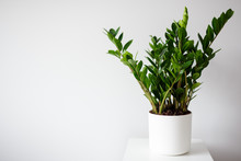 Plant In Pot Over White Wall B...
