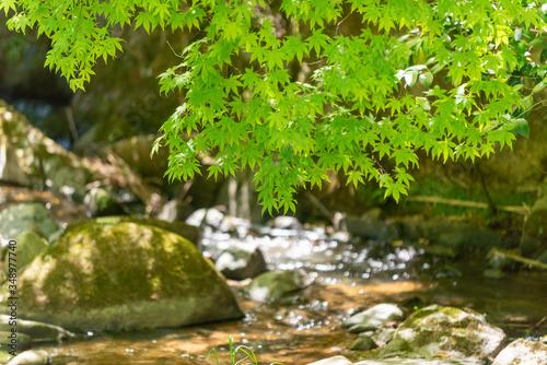 Fototapety, obrazy: 初夏の渓流
