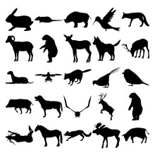 Set Of 25 Animals. Rabbit, Rat...
