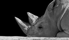Black And White Big Rhino Slee...