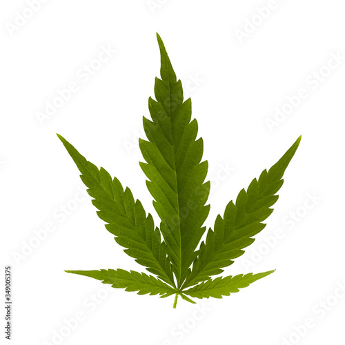 Green cannabis hemp on white background for medical design Wallpaper Mural