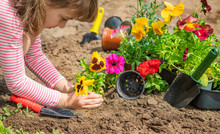 A Child Plants A Flower Garden...