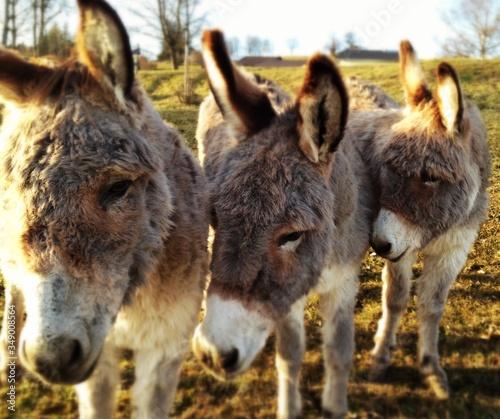 Valokuva Close-up Of Donkeys On Landscape