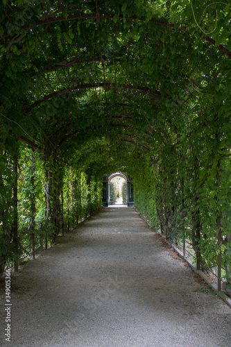 Fotomural Archway Covered With Ivies
