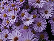 Close-up View Of Purple Flowers