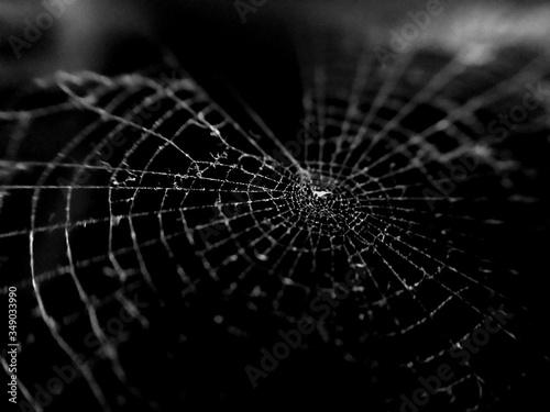 Close-up Of Spider Web Fototapeta