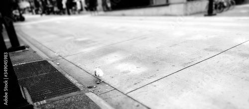 Fotografia High Angle View Of Seagull On Sidewalk
