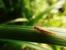 Close-up Of Cricket Insect On ...