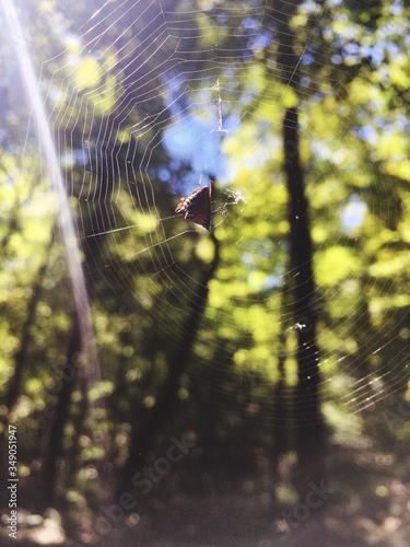 Stampa su Tela Close-up Of Spider And Web Against Blurred Background