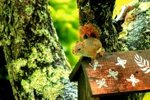 Squirrel On Birdhouse In Park
