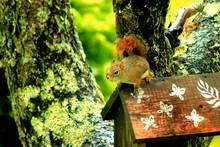 Squirrel On Birdhouse In Park