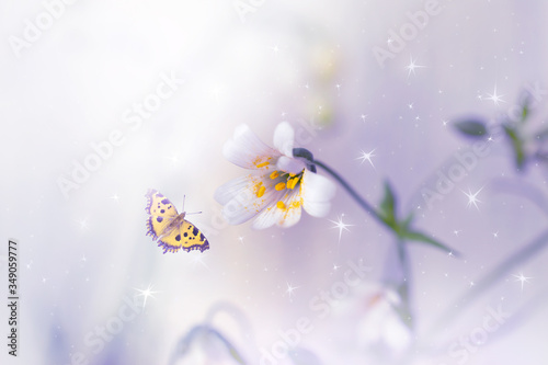 Fotografie, Obraz Blooming stellaria holostea macro flowers and flying butterfly on fantasy mysterious spring background with shining glowing stars, fabulous fairy tale floral garden, soft focus, artistic toned image