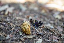 Mariposa Negra Con Manchas Amarillas Posada Sobre Roca