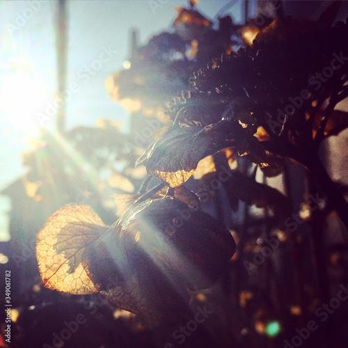 Fotografering Sunlight Falling On Leaves