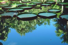 High Angle View Of Lily Pads Floating On Calm Lake