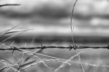 Detail Of Barbed Wire Fence