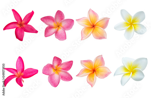 Fotomural Collection of  Plumeria isolated on white background