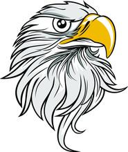 Eagle Head- Vector Illustration