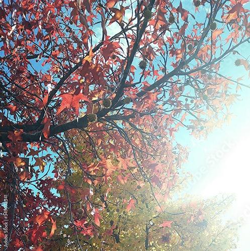 Obraz na plátně Lowe Angle View Of Tree During Sunny Day