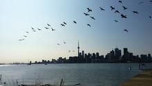 Silhouette Flock Of Birds Flying Against Urban Skyline