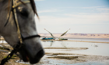 Horse On The Beach With Boat In Background In Faiyum, Egypt