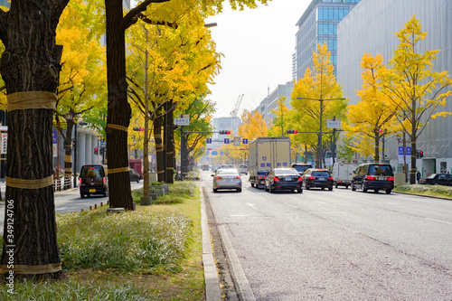 Fotografía Midosuji Boulevard and Ginkgo Trees in Osaka, Japan