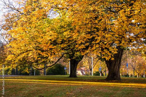 Fototapety, obrazy: Trees On Countryside Landscape