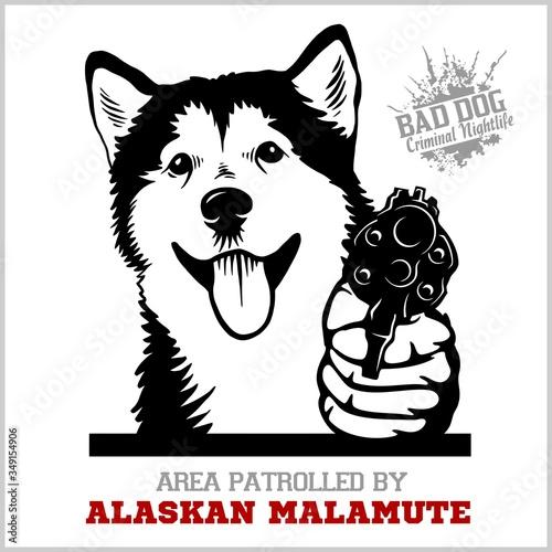 Photo Alaskan Malamute dog with revolver gun - Alaskan Malamute gangster