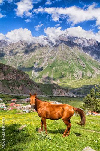 Horse, Caucasus mountains, Georgia