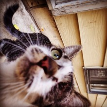 One-eyed Cat Looking Up