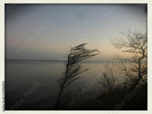 Windswept Tree Against Sky Slika na platnu