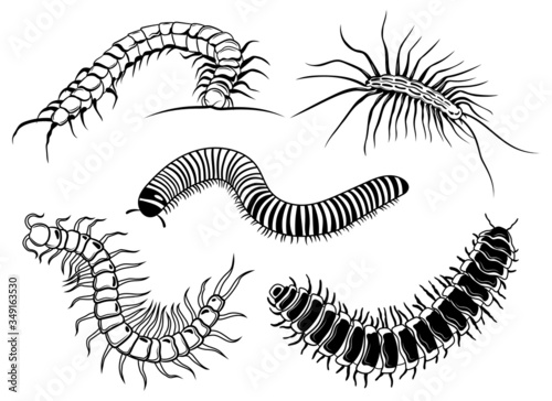 Set of scolopendra Canvas Print