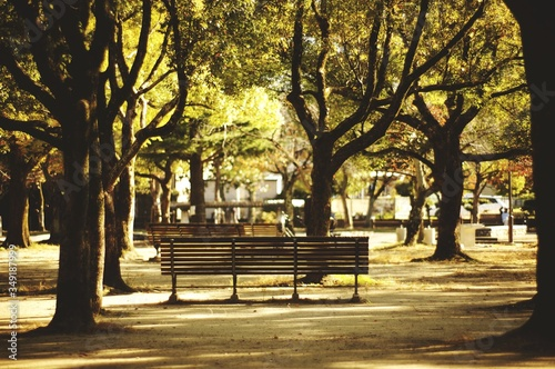Obraz na plátně Empty Benches Amidst Trees In Park