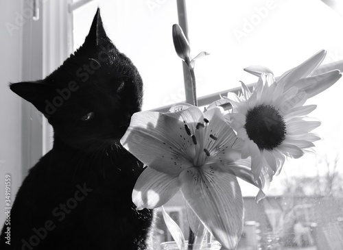 Canvastavla Close-up Of Black Cat Looking At Flowers By Window