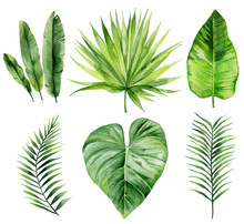 Exotic Leaves Set. Palm Fronds...