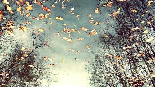 Obraz na plátně Reflection Of Trees And Sky In Puddle