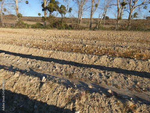 Fotografie, Tablou Surcos para la siembra