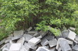 Kontrast zwischen Steinen und Pflanzen