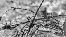 Close-up Of Rusty Barbed Wire ...